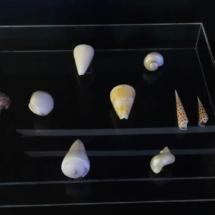 Caja de acrilico exhibidora de caracoles